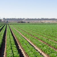 agricultura-Vida-Rural